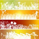 Ornement floral illustration stock