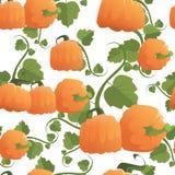 Ornement sans couture d'Autumn Harvest Concept Season Fall de fond de modèle de potiron Photo stock