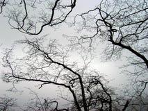 Ornement terrible des branches enlacées du bois incurvé curlicue Photos stock