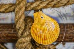 Ornements de coquillages sur la corde photographie stock libre de droits