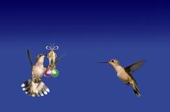 Ornements de transport de bille de colibri Photo libre de droits