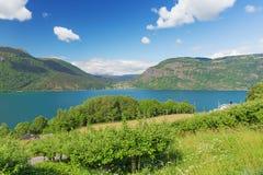 Ornes sulla riva del Lustrafjord immagini stock libere da diritti