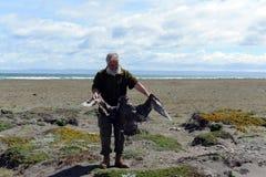 Ornitólogo con un pájaro muerto en el golfo de Inutil Fotos de archivo libres de regalías