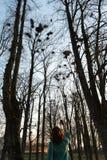 Ornitólogo femenino joven que toma una foto de los estafadores que jerarquizan arriba para arriba en árboles en la primavera - Ba imágenes de archivo libres de regalías