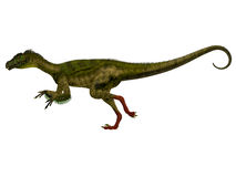 Ornitholestes Side Profile Royalty Free Stock Photo