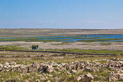 Ornithological reserve on Pag with watching tower. Ornithological reserve on Pag island with watching tower, Croatia, Dalmatia Stock Images