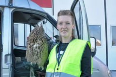 Ornithological Service Pulkovo Airport. St. Petersburg, Russia Royalty Free Stock Image