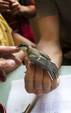 ornithologist records a bird Stock Images