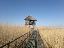 Ornitology watchhouse with reed roof. Bird watchhouse with reed roof and wooden pathway near lake in Latvia Royalty Free Stock Images