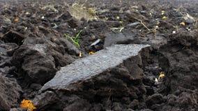 Orny rolniczy przemysł Ziemia uprawna krajobraz, ostatnio przygotowany dla żniwa i zaorany, rolnictwo obraz royalty free