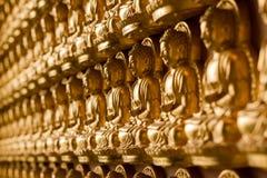 Oro Buddha sulla parete Immagini Stock