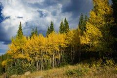 Oro de Colorado imagen de archivo libre de regalías