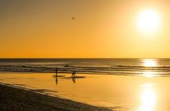 Oro de las personas que practica surf imagen de archivo