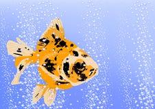 Oro de los pescados Foto de archivo libre de regalías