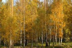 Oro de Rusia Foto de archivo libre de regalías