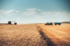 Oro Defocused di raccolto meccanico di agricoltura della mietitrebbiatrice Immagine Stock