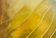 Oro del color del modelo Imágenes de archivo libres de regalías