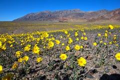Oro #6 del deserto Fotografia Stock Libera da Diritti