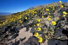 Oro del deserto Fotografia Stock Libera da Diritti