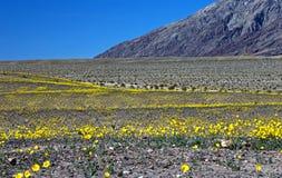 Oro del deserto Immagini Stock Libere da Diritti