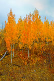 Oro del otoño Fotos de archivo libres de regalías