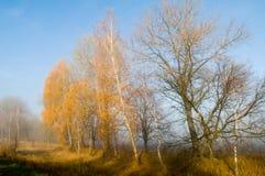 Oro del otoño en la niebla Fotos de archivo