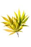 Oro di autunno Immagini Stock