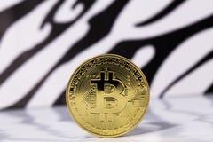 Oro di Bitcoin placcato Immagini Stock