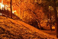 Oro di notte Immagine Stock Libera da Diritti