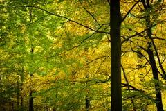 Oro e foglie verdi nella foresta di autunno immagini stock