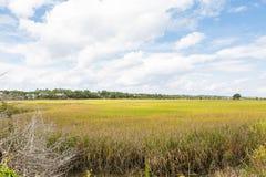 Oro e hierba verde en pantano del humedal Fotografía de archivo