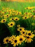 Oro e mare verde fotografie stock