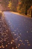 Oro e strada blu Fotografia Stock Libera da Diritti