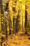 In oro foresta vestita fotografie stock