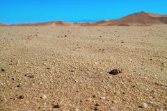 Oro hermoso en el desierto de Namib ?frica fotografía de archivo libre de regalías