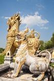 Oro leo e Leo bianco Immagini Stock Libere da Diritti
