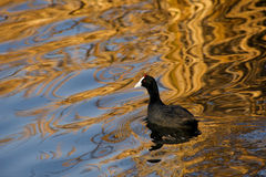 Oro liquido immagine stock libera da diritti