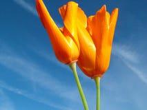 Oro y azul Imagen de archivo libre de regalías