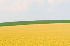 Oro y verde Imagen de archivo libre de regalías