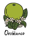 Oroblanco fruit Stock Photography