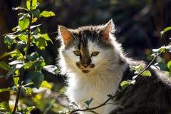 Orologi buoni del gatto con interesse Fotografie Stock