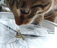 Orologi e gatto Fotografia Stock Libera da Diritti