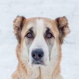 Orologi rossi del cane Immagini Stock Libere da Diritti
