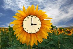 Orologio del girasole Fotografie Stock Libere da Diritti