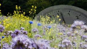 Orologio e fiori bianchi stock footage