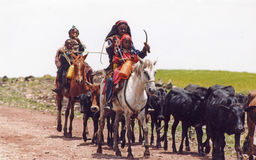 Oromo nomads. Nomads women with their cattle in ethiopia Stock Image