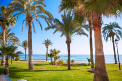 Oropesa de Mar in Castellon palm tree garden in mediterranean Royalty Free Stock Photos