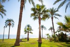 Oropesa DE Mar in Castellon-palmtuin in Middellandse-Zeegebied Royalty-vrije Stock Foto's