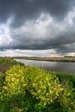 Orosmoln gör mörkare himlen med ljusa rapsfröblommor i förgrunden längs en kanal i Holland fotografering för bildbyråer