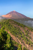 Orotava Valley Royalty Free Stock Image